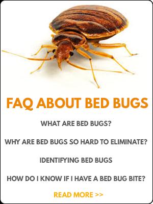 FAQ teaser