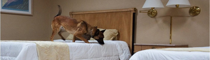 Bed Bug K-9 Inspection